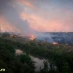 Incendiu de vegetatie in spate la mall (3)