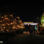 Lumini de Craciun in Bacau (4)