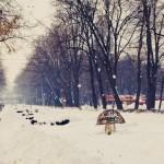 Parcul Cancicov (2)