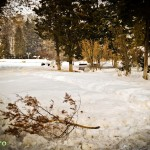 Parcul Cancicov (7)