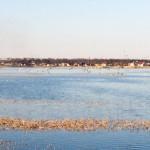 Lacul Bacau II (1)