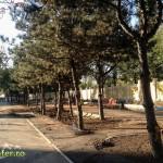 tineretului parc imprejmuit (2)