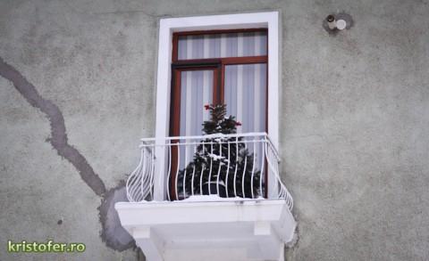 brad in balcon bacau