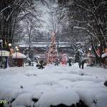 parcul cancicov iarna craciun 2012 3