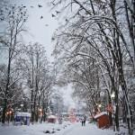 parcul cancicov iarna craciun 2012 5