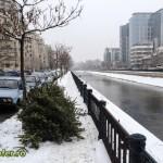 brazi in strada - bucuresti 2013 (3)