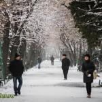 plimbare in cismigiu 2013 (3)