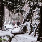 plimbare in cismigiu 2013 (6)