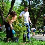 1 mai 2013 ecologizare plantare tsd bacau-5