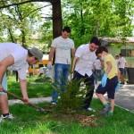 1 mai 2013 ecologizare plantare tsd bacau-6