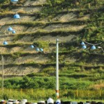 speed park bacau campionat karturi-9