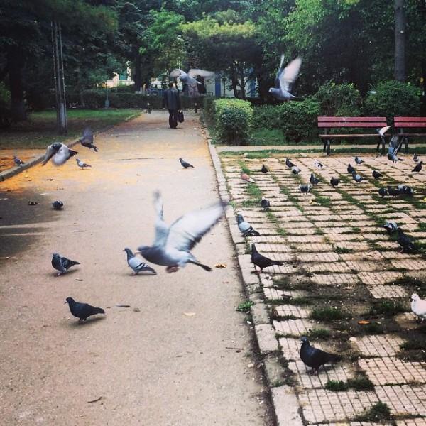 porumbei bacau 2014 instagram