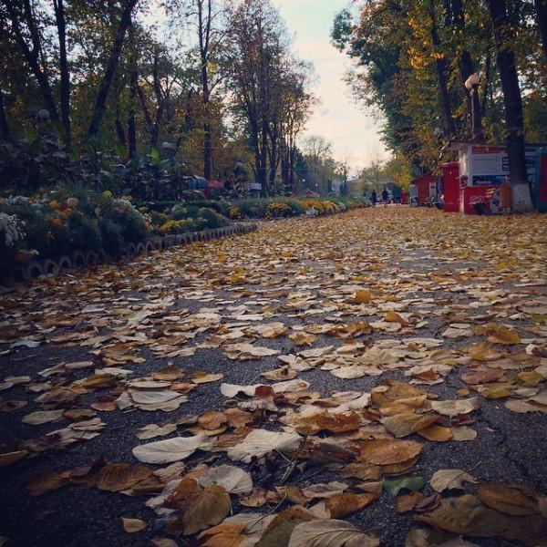 toamna parcul cancicov bacau instagram 2014