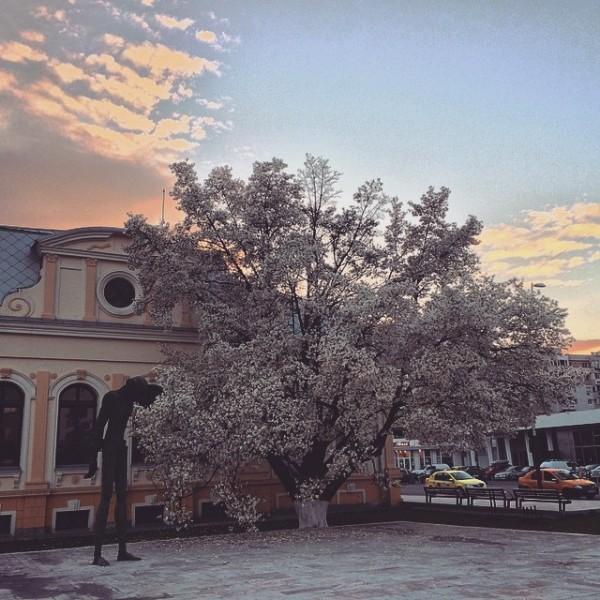 2015-biblioteca-judeteana