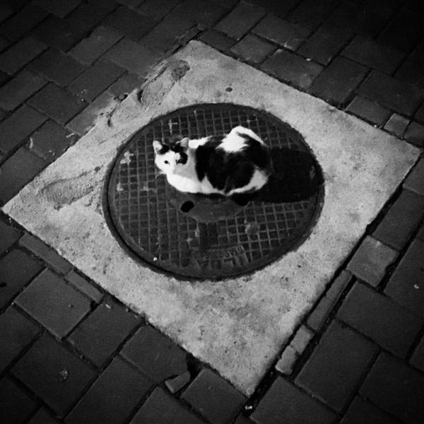 5 pisica canal bacau