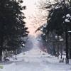 parcul cancicov iarna zapada
