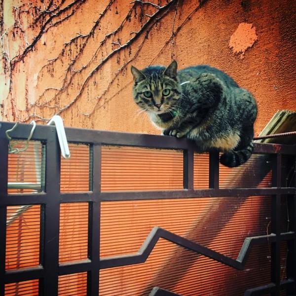 06 pisica sar