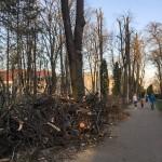 stare Parcul Cancicov 2018-3