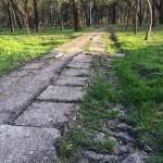stare Parcul Cancicov 2018-7