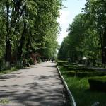 Tasnitoare in Parcul Cancicov (1)