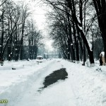 Parcul Cancicov (4)