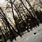 Parcul Cancicov (5)