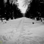 Parcul Cancicov (8)