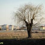 Aventuri urbane - lacul fara nume bacau (5)