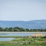 plimbare concurs caiac lacul bacau ii saptamana nationala a voluntariatului cre (1)