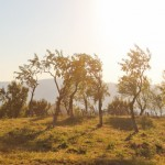 Maratonul dezvoltarii durabile satul prunilor-16