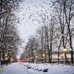 parcul cancicov iarna craciun 2012 11