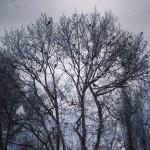 ciori de iarna in parcul cancicov