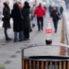 coca-cola in centrul orasului bacau