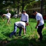 1 mai 2013 ecologizare plantare tsd bacau-3
