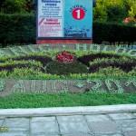 slanic moldova flori-1