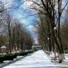 Iarna in Parcul Cancicov v2