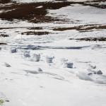 platoul bucegi sfinxul babele 2014 (28)