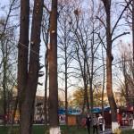 stare Parcul Cancicov 2018-9
